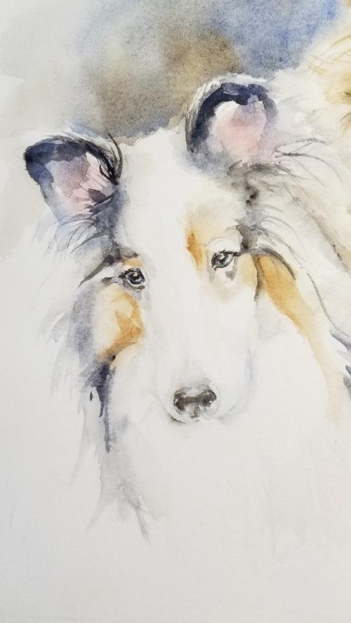dog cindy 2017