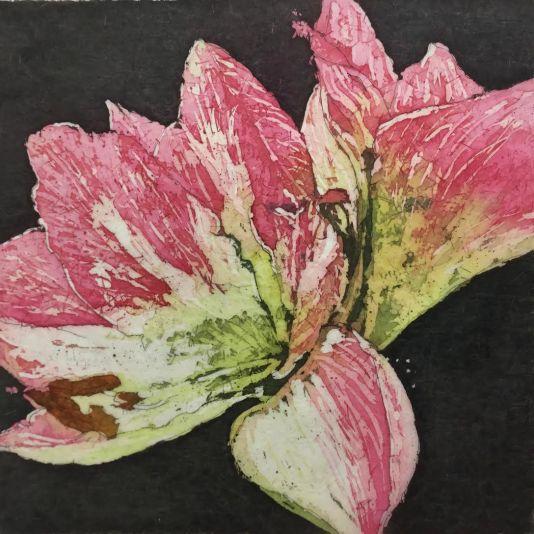 apple blossom amarylis Paige.jpg