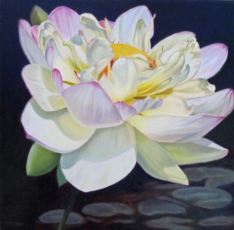 lotus sm.jpg