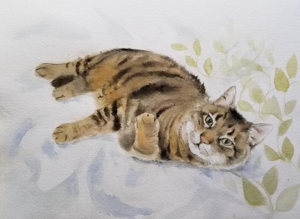 cindy cat